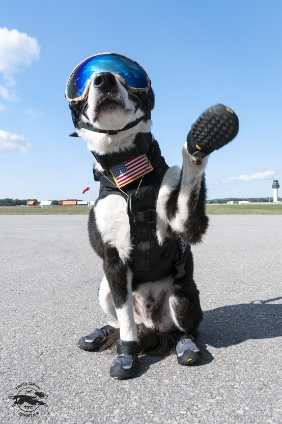 Piper The Airport K 9 Wildlife Control Team At Cherry